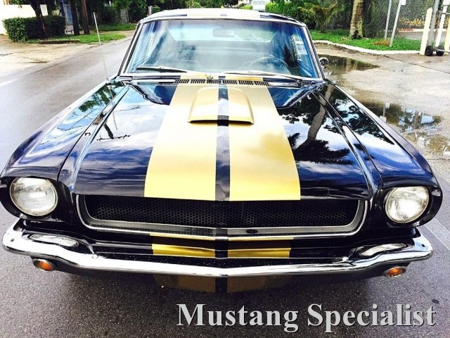 FORD Mustang Fastback 289 Shelby Tribute Cambio Man 4 Marce Immagine 3
