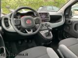 FIAT Panda 1.0 FireFly S&S Hybrid LaunchEdition SOLO NOLEGGIO