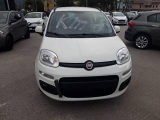 FIAT Panda 1.2 Benzina 69 CV Lounge Km 0